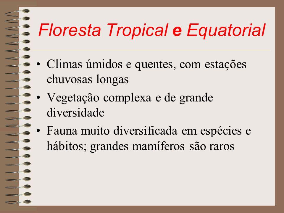 Floresta Tropical e Equatorial Climas úmidos e quentes, com estações chuvosas longas Vegetação complexa e de grande diversidade Fauna muito diversific