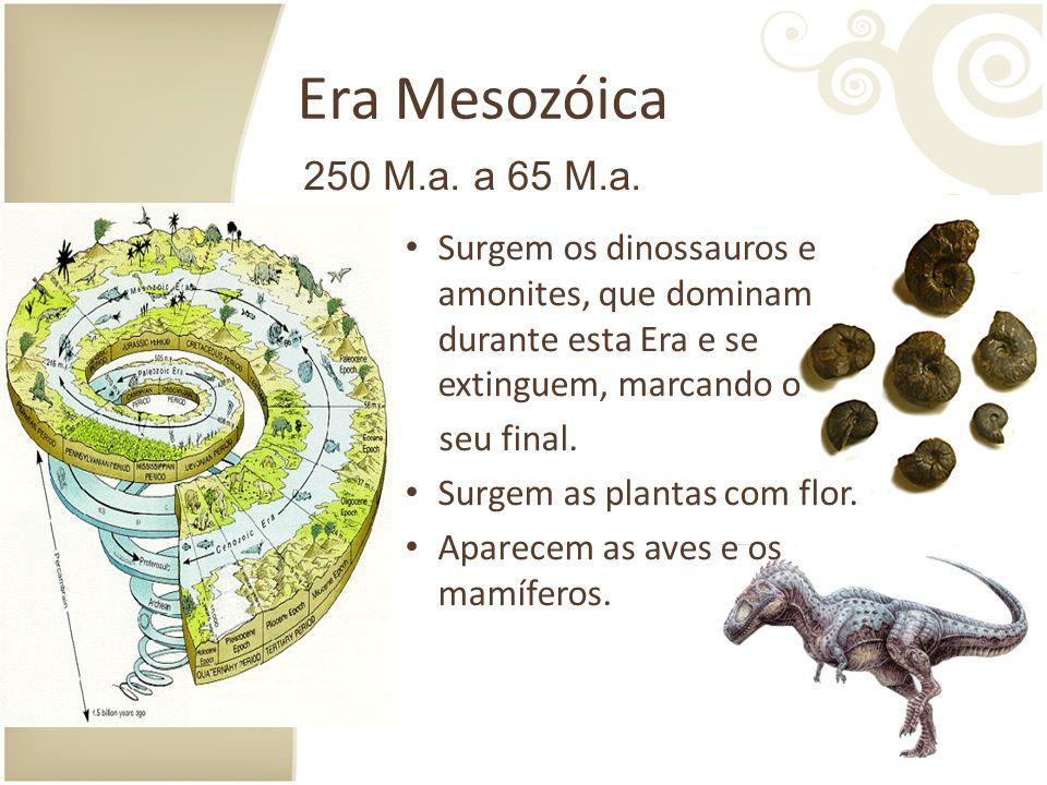 Era Mesozóica Surgem os dinossauros e amonites, que dominam durante esta Era e se extinguem, marcando o seu final.