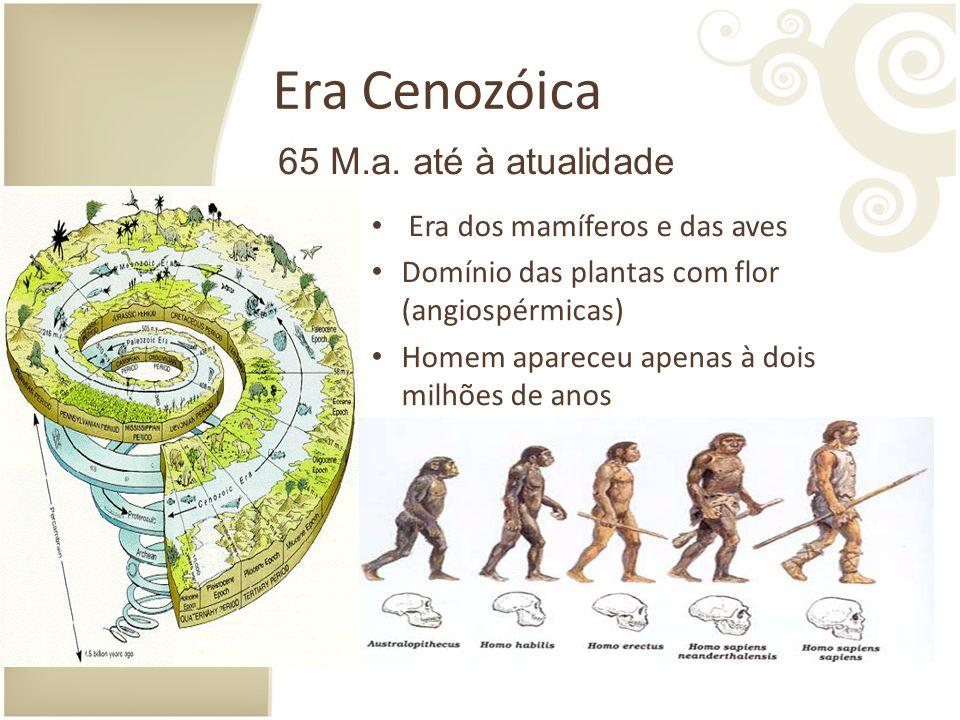 Era Cenozóica Era dos mamíferos e das aves Domínio das plantas com flor (angiospérmicas) Homem apareceu apenas à dois milhões de anos 65 M.a.