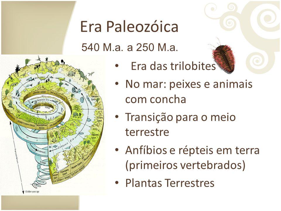 Era Paleozóica Era das trilobites No mar: peixes e animais com concha Transição para o meio terrestre Anfíbios e répteis em terra (primeiros vertebrados) Plantas Terrestres 540 M.a.