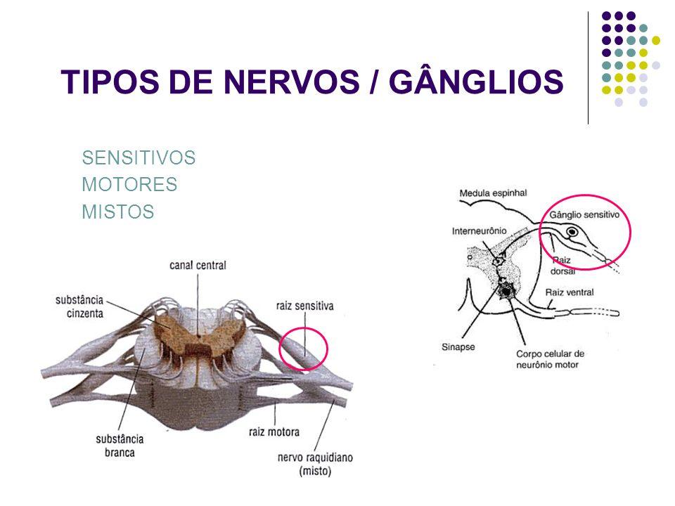 TIPOS DE NERVOS / GÂNGLIOS SENSITIVOS MOTORES MISTOS