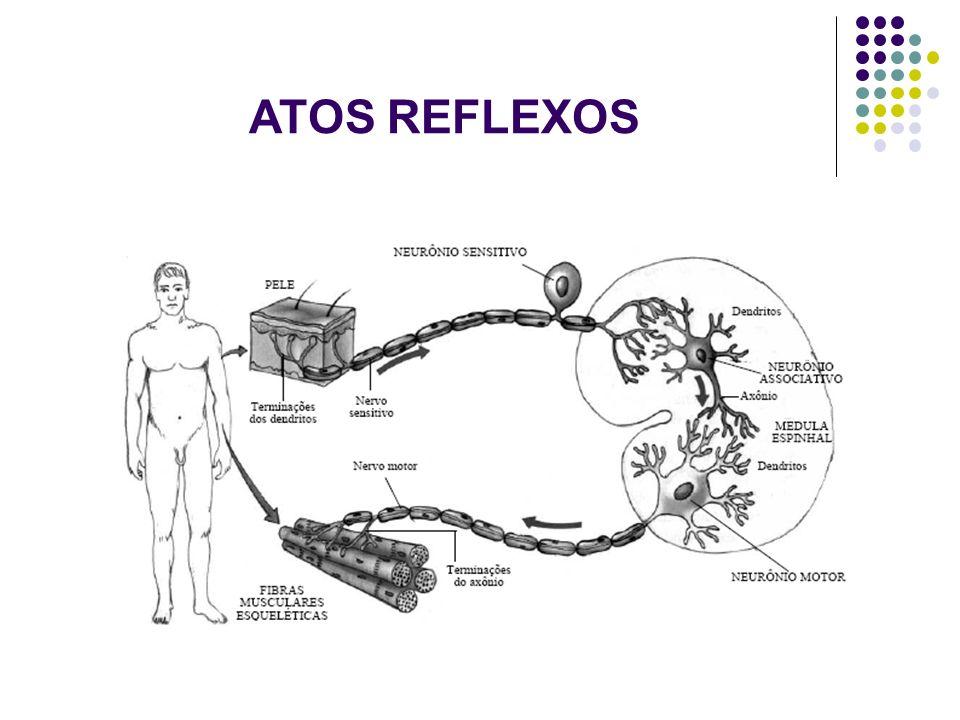 ATOS REFLEXOS