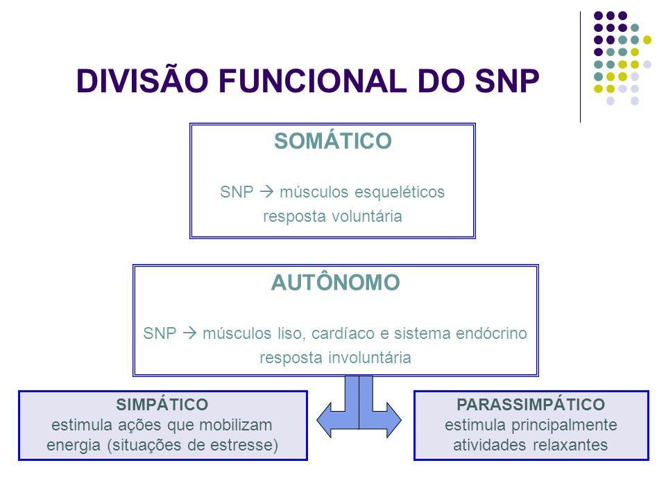 DIVISÃO FUNCIONAL DO SNP SOMÁTICO SNP músculos esqueléticos resposta voluntária AUTÔNOMO SNP músculos liso, cardíaco e sistema endócrino resposta invo