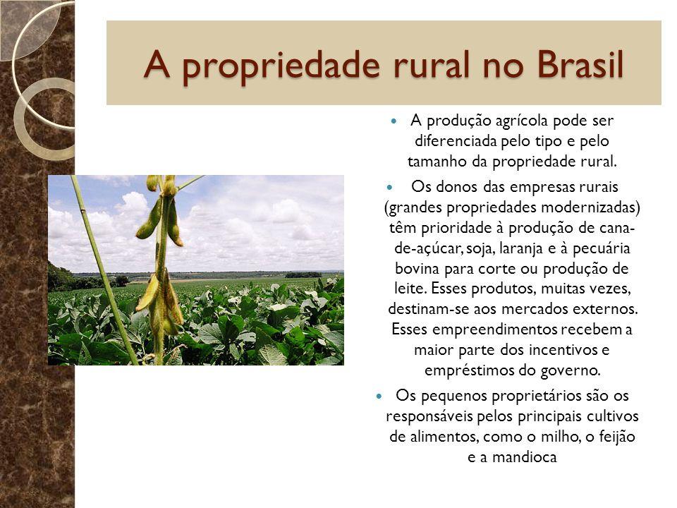 A propriedade rural no Brasil A produção agrícola pode ser diferenciada pelo tipo e pelo tamanho da propriedade rural. Os donos das empresas rurais (g