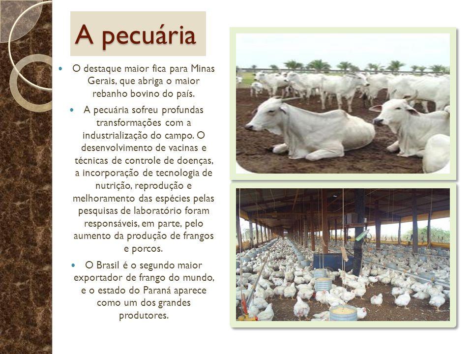 A pecuária O destaque maior fica para Minas Gerais, que abriga o maior rebanho bovino do país. A pecuária sofreu profundas transformações com a indust