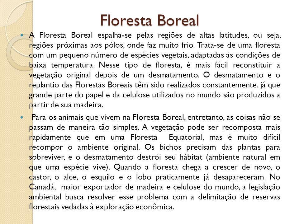 Floresta Boreal A Floresta Boreal espalha-se pelas regiões de altas latitudes, ou seja, regiões próximas aos pólos, onde faz muito frio. Trata-se de u