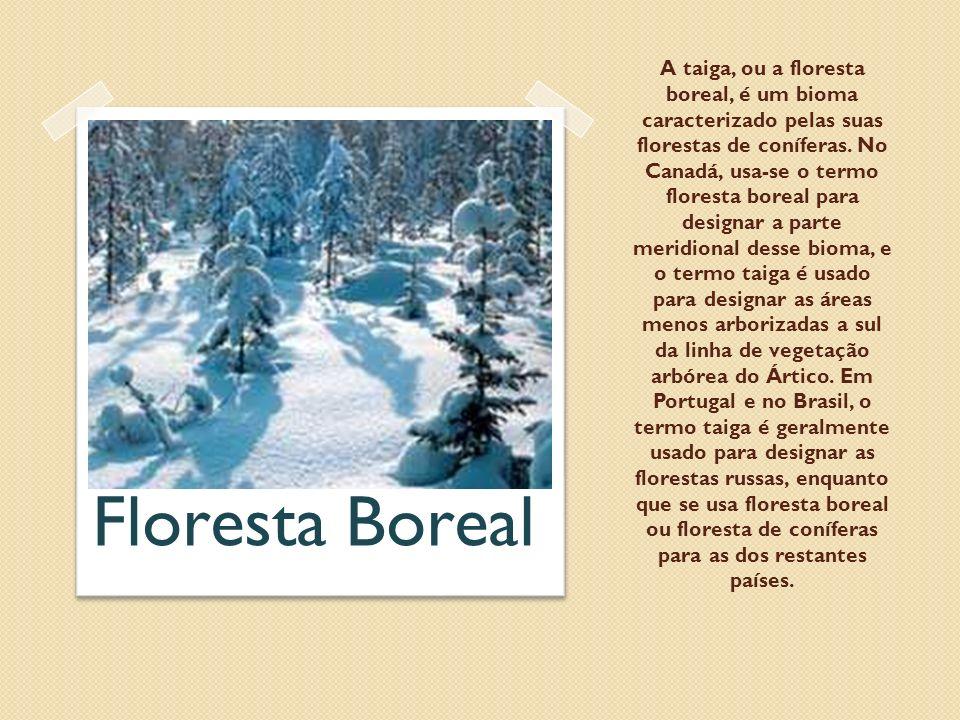 A taiga, ou a floresta boreal, é um bioma caracterizado pelas suas florestas de coníferas. No Canadá, usa-se o termo floresta boreal para designar a p