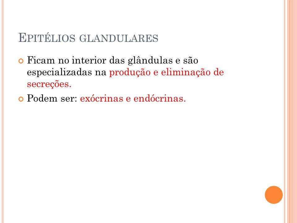 E PITÉLIOS GLANDULARES Ficam no interior das glândulas e são especializadas na produção e eliminação de secreções. Podem ser: exócrinas e endócrinas.