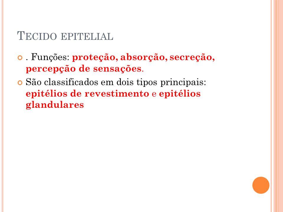T ECIDO EPITELIAL.Funções: proteção, absorção, secreção, percepção de sensações.
