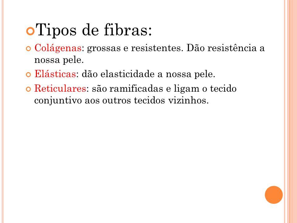 Tipos de fibras: Colágenas: grossas e resistentes. Dão resistência a nossa pele. Elásticas: dão elasticidade a nossa pele. Reticulares: são ramificada