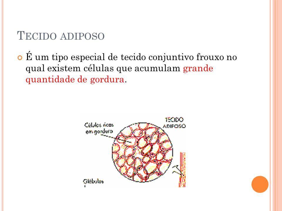 T ECIDO ADIPOSO É um tipo especial de tecido conjuntivo frouxo no qual existem células que acumulam grande quantidade de gordura.