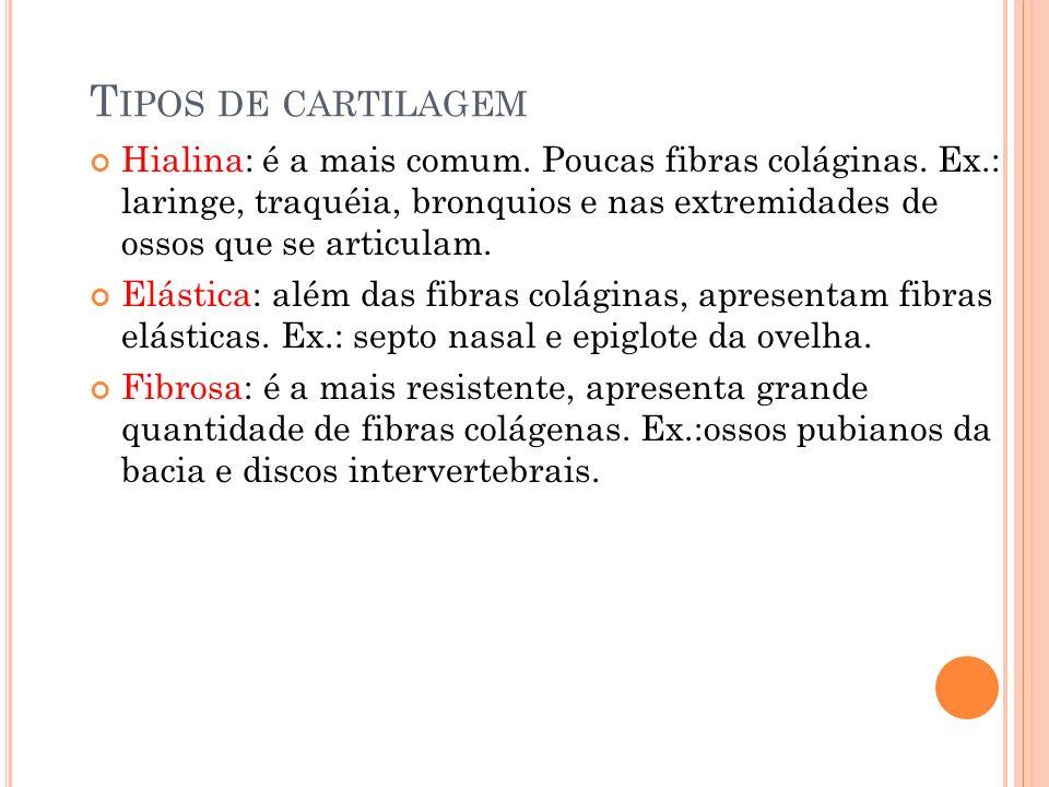 T IPOS DE CARTILAGEM Hialina: é a mais comum. Poucas fibras coláginas. Ex.: laringe, traquéia, bronquios e nas extremidades de ossos que se articulam.