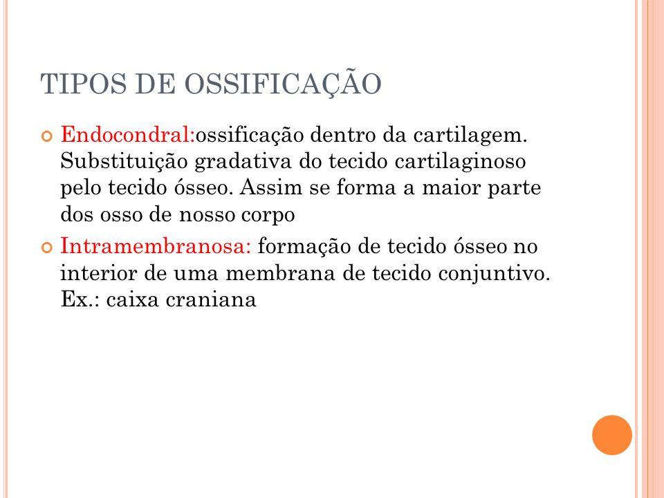 TIPOS DE OSSIFICAÇÃO Endocondral:ossificação dentro da cartilagem. Substituição gradativa do tecido cartilaginoso pelo tecido ósseo. Assim se forma a