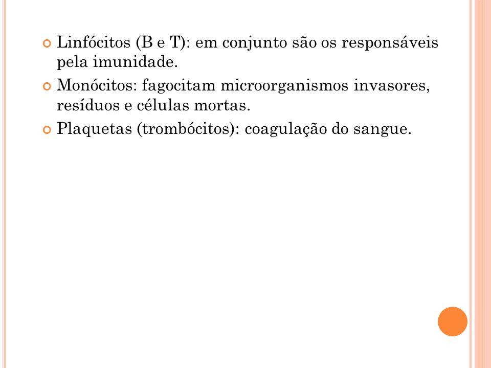Linfócitos (B e T): em conjunto são os responsáveis pela imunidade. Monócitos: fagocitam microorganismos invasores, resíduos e células mortas. Plaquet
