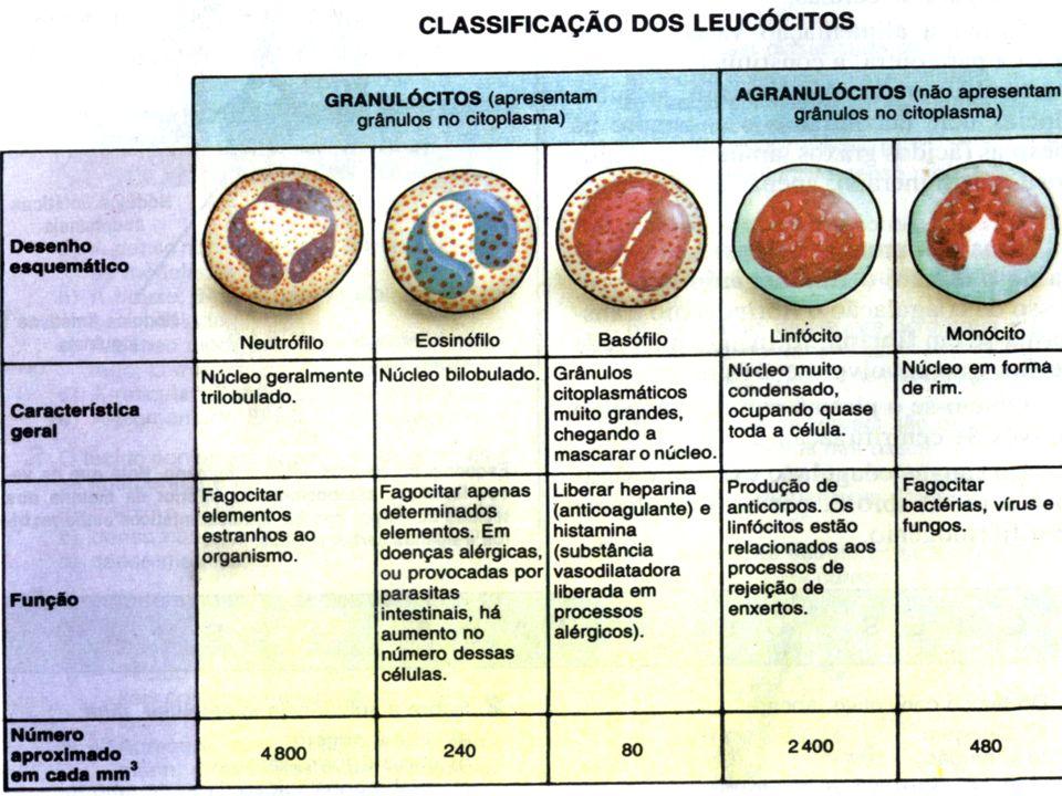 G LÓBULOS BRANCOS ( LEUCÓCITOS ) E HEMÁCIAS