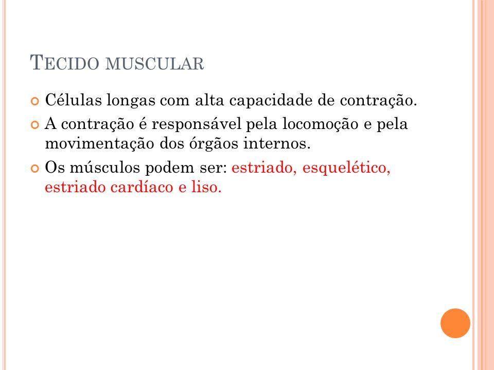 T ECIDO MUSCULAR Células longas com alta capacidade de contração. A contração é responsável pela locomoção e pela movimentação dos órgãos internos. Os