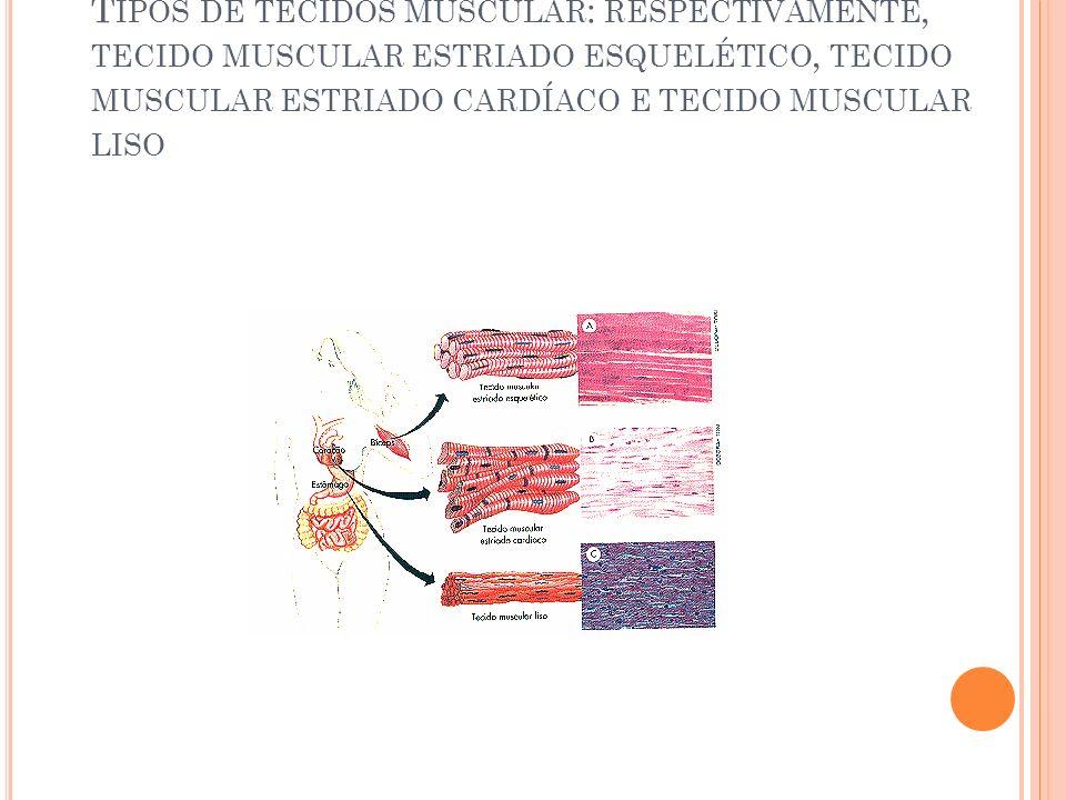T IPOS DE TECIDOS MUSCULAR : RESPECTIVAMENTE, TECIDO MUSCULAR ESTRIADO ESQUELÉTICO, TECIDO MUSCULAR ESTRIADO CARDÍACO E TECIDO MUSCULAR LISO