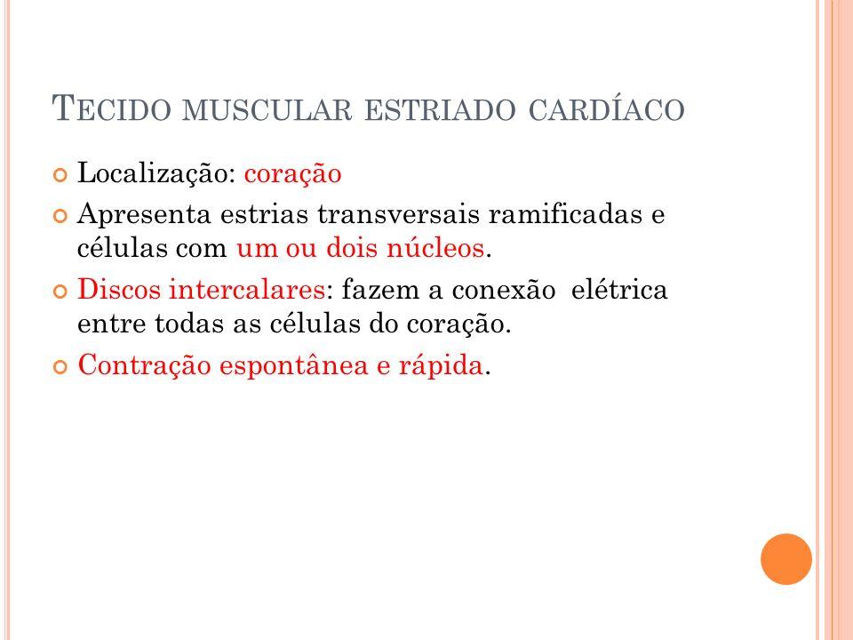 T ECIDO MUSCULAR ESTRIADO CARDÍACO Localização: coração Apresenta estrias transversais ramificadas e células com um ou dois núcleos. Discos intercalar
