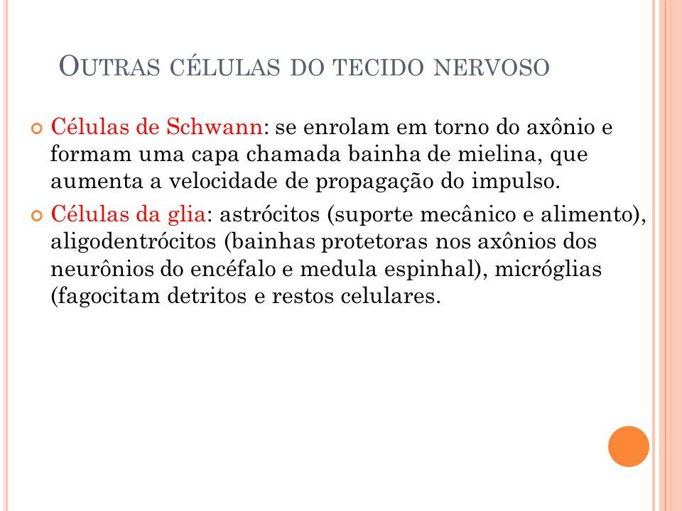 O UTRAS CÉLULAS DO TECIDO NERVOSO Células de Schwann: se enrolam em torno do axônio e formam uma capa chamada bainha de mielina, que aumenta a velocidade de propagação do impulso.