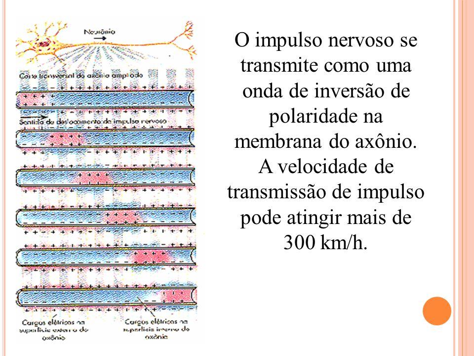 O impulso nervoso se transmite como uma onda de inversão de polaridade na membrana do axônio. A velocidade de transmissão de impulso pode atingir mais
