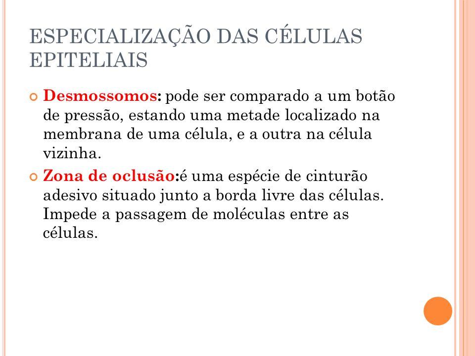 ESPECIALIZAÇÃO DAS CÉLULAS EPITELIAIS Desmossomos: pode ser comparado a um botão de pressão, estando uma metade localizado na membrana de uma célula,