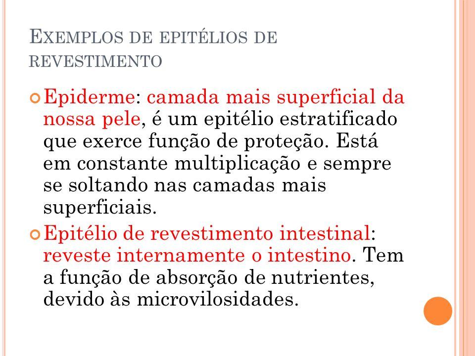 Epitélio dos túbulos renais: tem a função de reabsorção das substâncias úteis da urina, possui grande número de invaginações.
