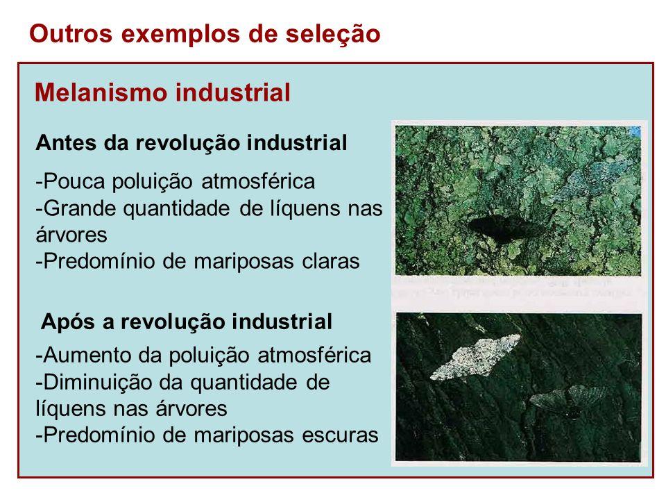 Melanismo industrial Outros exemplos de seleção -Pouca poluição atmosférica -Grande quantidade de líquens nas árvores -Predomínio de mariposas claras