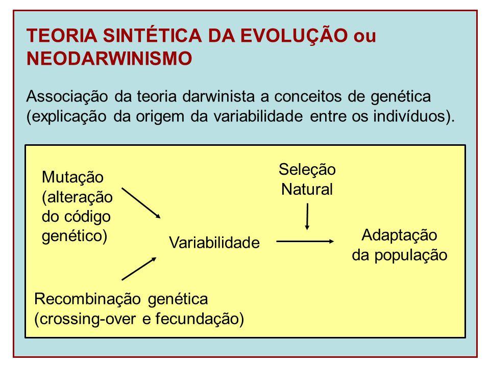 TEORIA SINTÉTICA DA EVOLUÇÃO ou NEODARWINISMO Associação da teoria darwinista a conceitos de genética (explicação da origem da variabilidade entre os