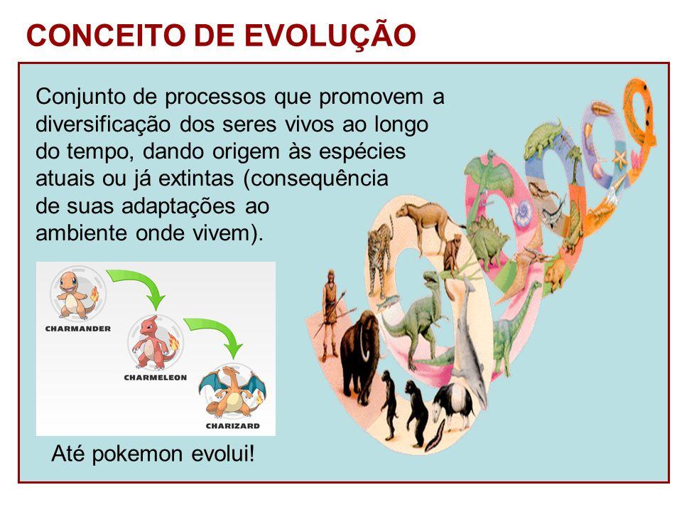 CONCEITO DE EVOLUÇÃO Conjunto de processos que promovem a diversificação dos seres vivos ao longo do tempo, dando origem às espécies atuais ou já exti