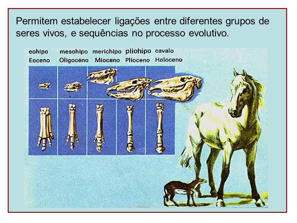 Permitem estabelecer ligações entre diferentes grupos de seres vivos, e sequências no processo evolutivo.
