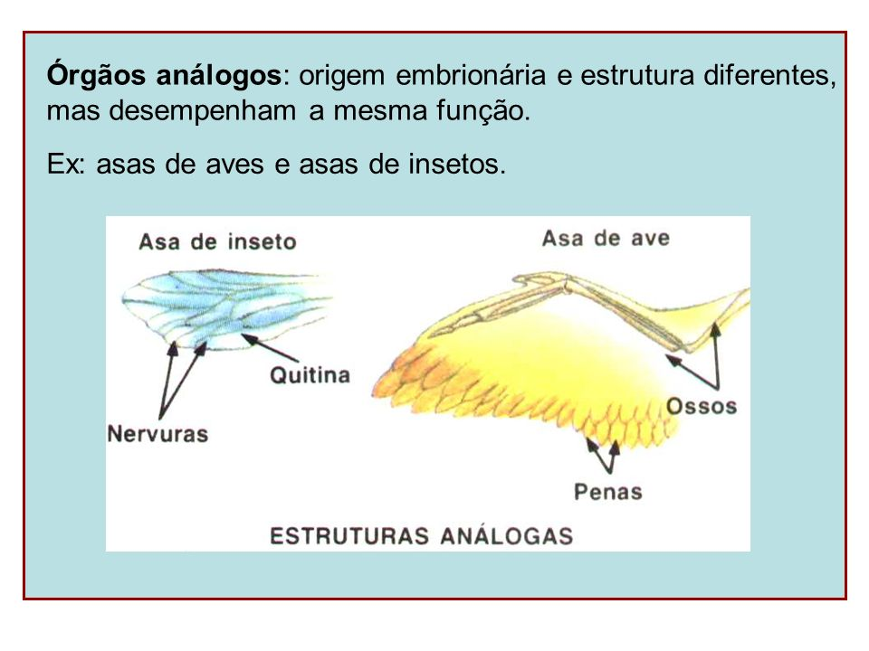 Órgãos análogos: origem embrionária e estrutura diferentes, mas desempenham a mesma função. Ex: asas de aves e asas de insetos.