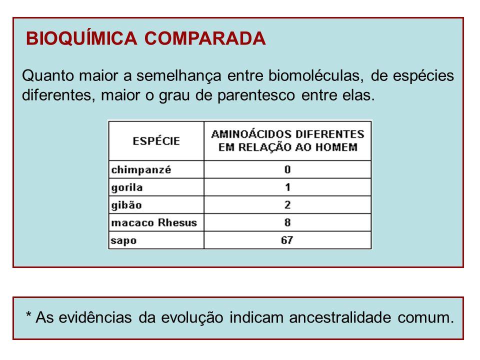 BIOQUÍMICA COMPARADA Quanto maior a semelhança entre biomoléculas, de espécies diferentes, maior o grau de parentesco entre elas. * As evidências da e