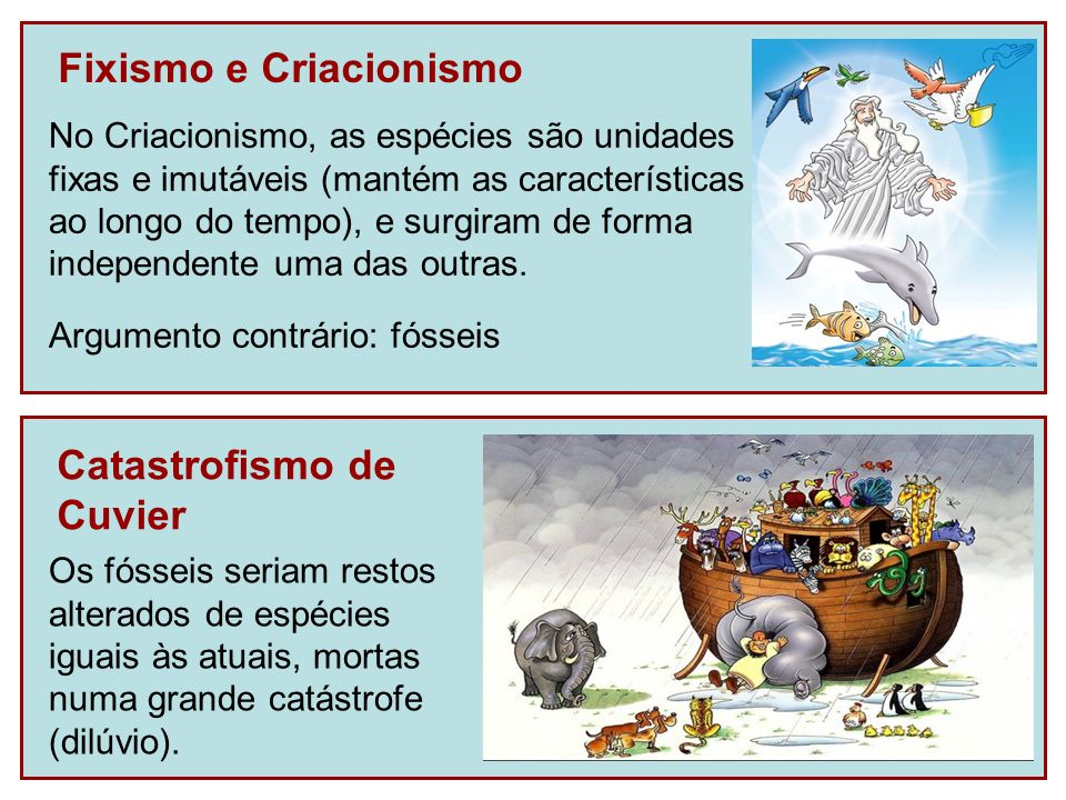 Fixismo e Criacionismo Argumento contrário: fósseis No Criacionismo, as espécies são unidades fixas e imutáveis (mantém as características ao longo do