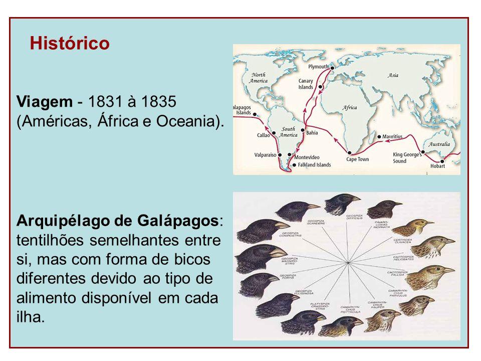 Histórico Viagem - 1831 à 1835 (Américas, África e Oceania). Arquipélago de Galápagos: tentilhões semelhantes entre si, mas com forma de bicos diferen