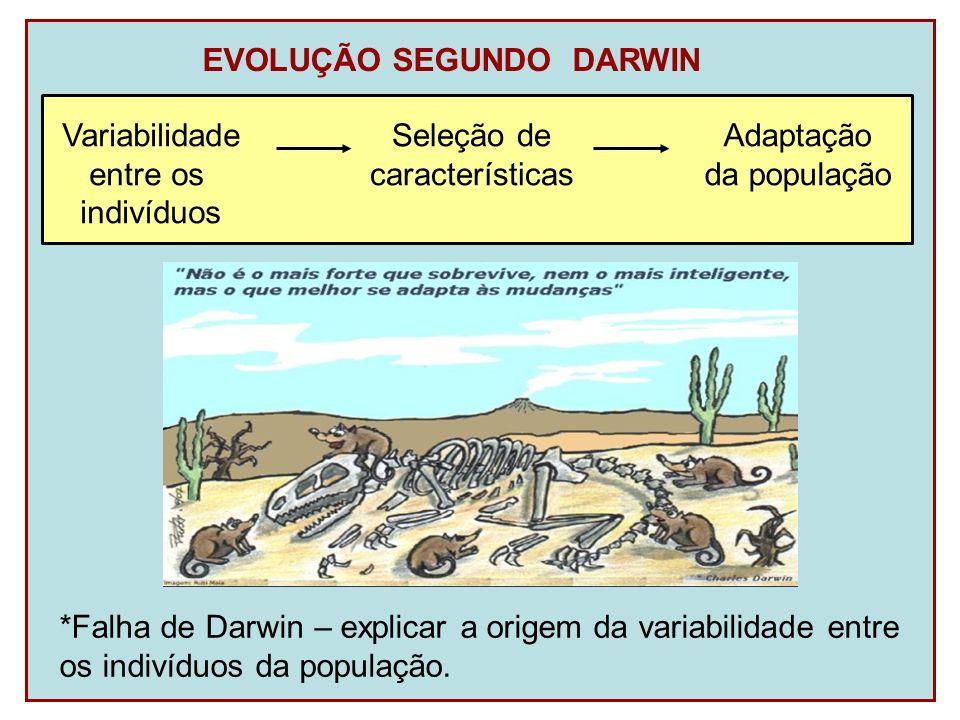 EVOLUÇÃO SEGUNDO DARWIN *Falha de Darwin – explicar a origem da variabilidade entre os indivíduos da população. Variabilidade entre os indivíduos Sele