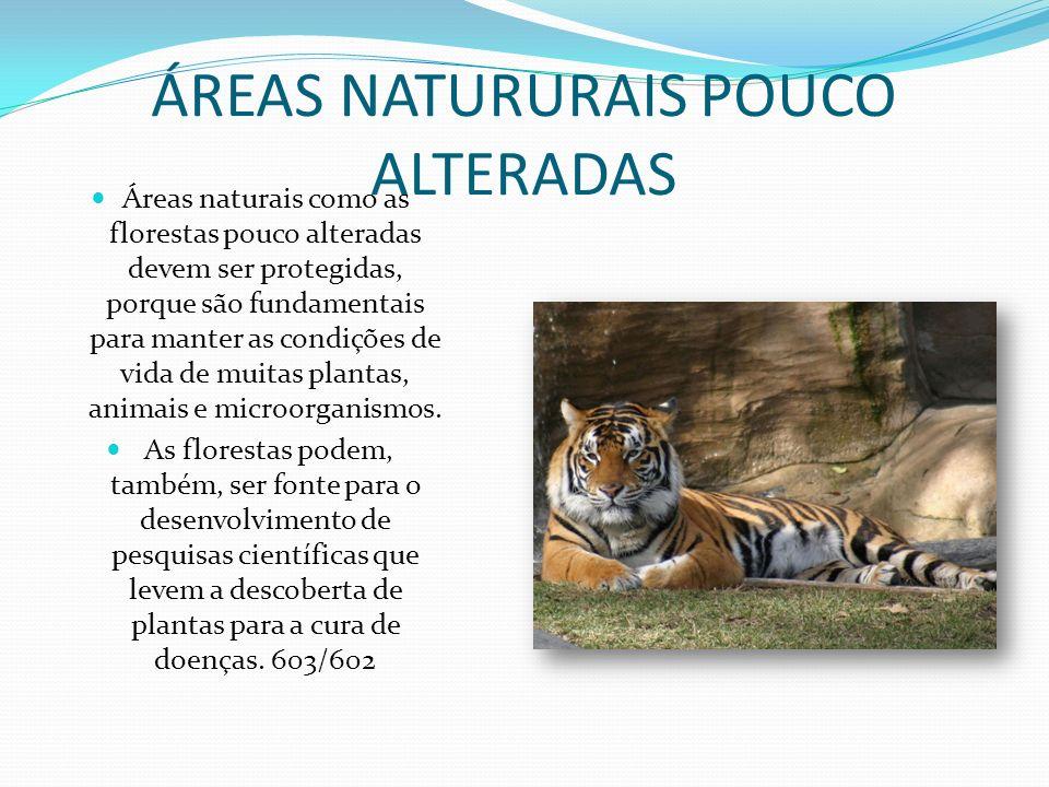 ÁREAS NATURURAIS POUCO ALTERADAS Áreas naturais como as florestas pouco alteradas devem ser protegidas, porque são fundamentais para manter as condições de vida de muitas plantas, animais e microorganismos.