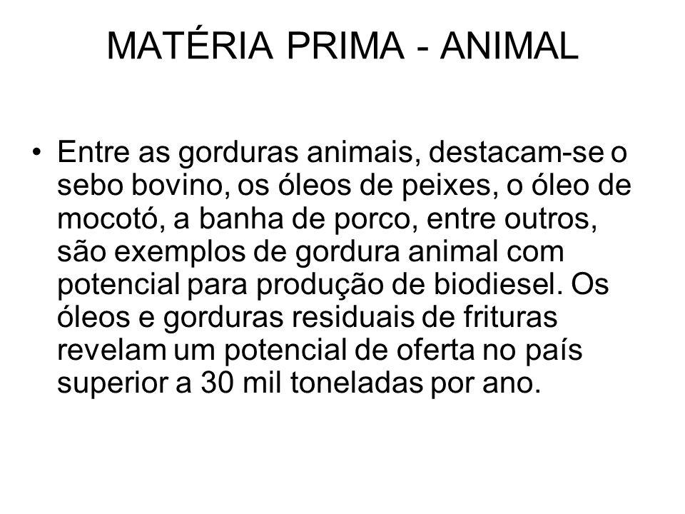 MATÉRIA PRIMA - ANIMAL Entre as gorduras animais, destacam-se o sebo bovino, os óleos de peixes, o óleo de mocotó, a banha de porco, entre outros, são