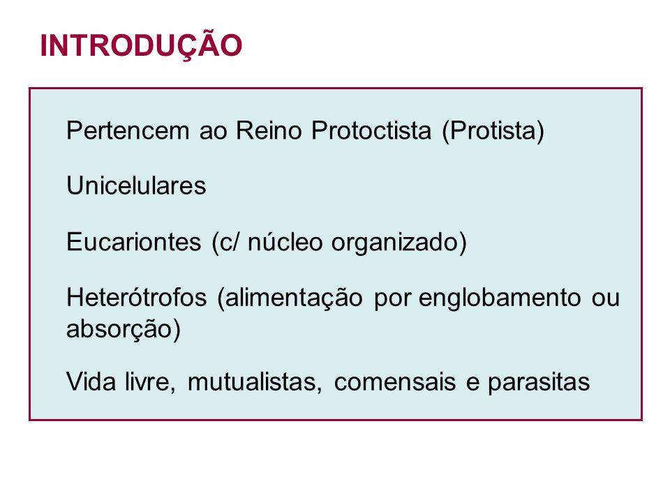 Pertencem ao Reino Protoctista (Protista) Unicelulares Eucariontes (c/ núcleo organizado) Heterótrofos (alimentação por englobamento ou absorção) Vida