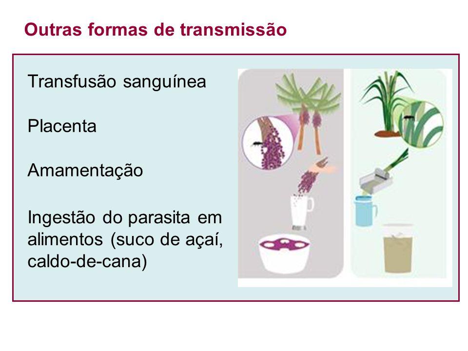 Transfusão sanguínea Outras formas de transmissão Placenta Amamentação Ingestão do parasita em alimentos (suco de açaí, caldo-de-cana)