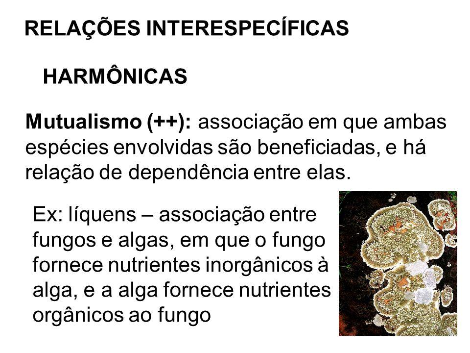 RELAÇÕES INTERESPECÍFICAS HARMÔNICAS Mutualismo (++): associação em que ambas espécies envolvidas são beneficiadas, e há relação de dependência entre