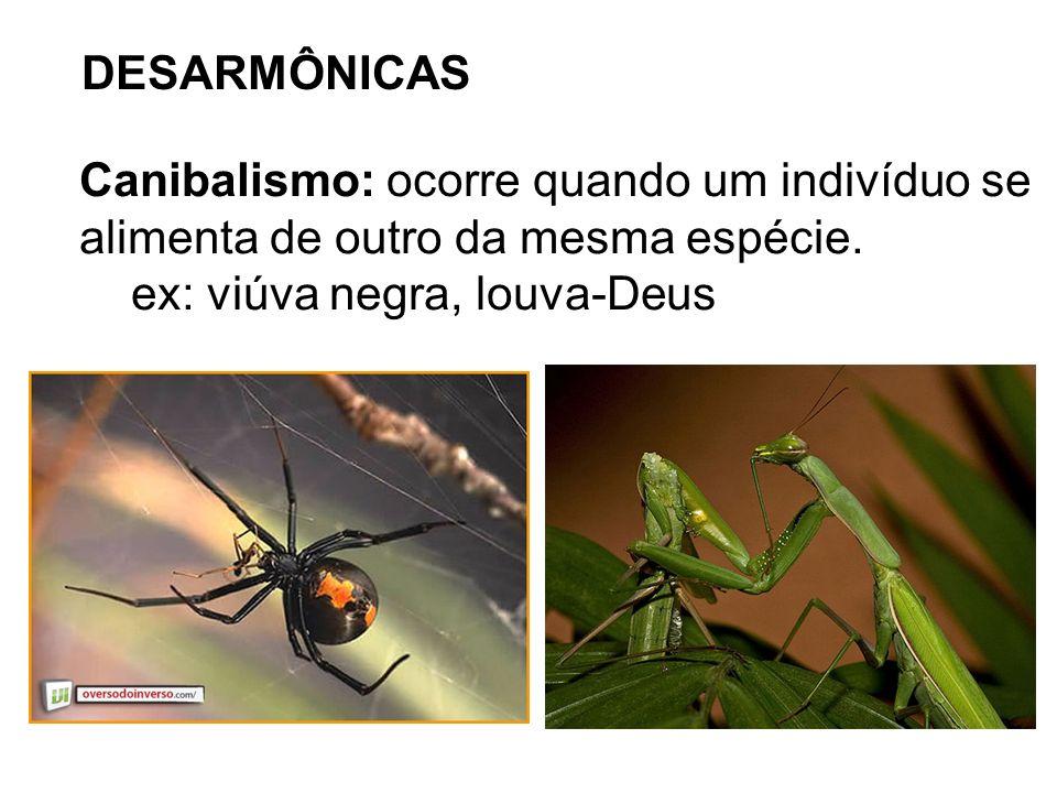 DESARMÔNICAS Canibalismo: ocorre quando um indivíduo se alimenta de outro da mesma espécie. ex: viúva negra, louva-Deus