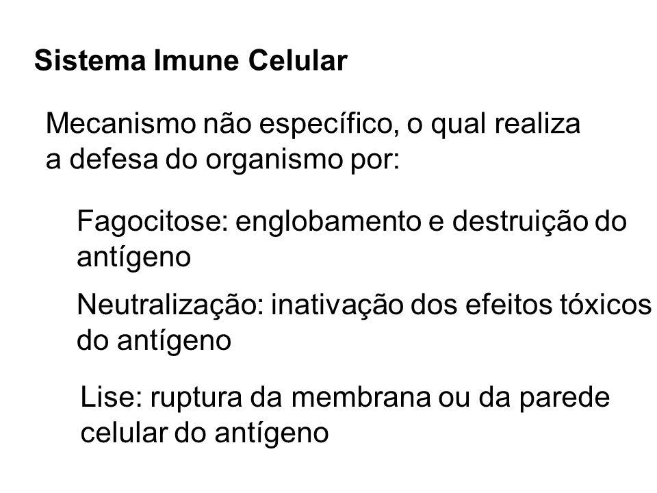 Sistema Imune Celular Mecanismo não específico, o qual realiza a defesa do organismo por: Fagocitose: englobamento e destruição do antígeno Neutraliza