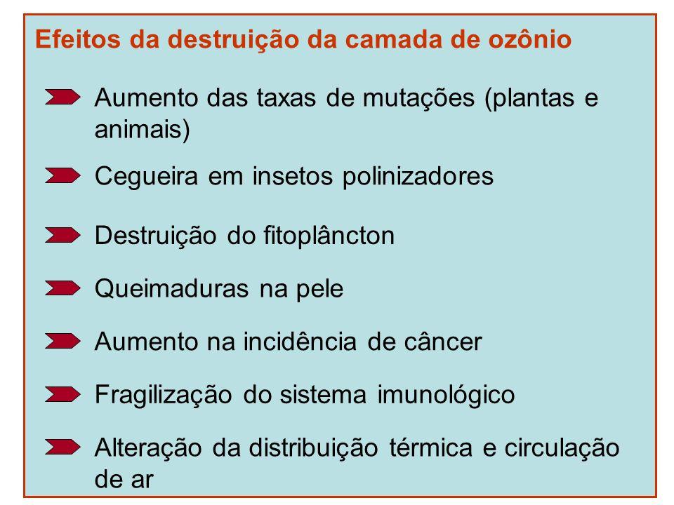 Efeitos da destruição da camada de ozônio Aumento das taxas de mutações (plantas e animais) Cegueira em insetos polinizadores Destruição do fitoplânct