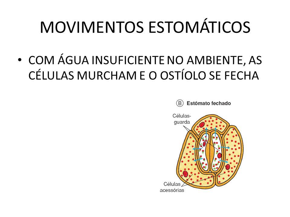 MOVIMENTOS ESTOMÁTICOS COM ÁGUA INSUFICIENTE NO AMBIENTE, AS CÉLULAS MURCHAM E O OSTÍOLO SE FECHA