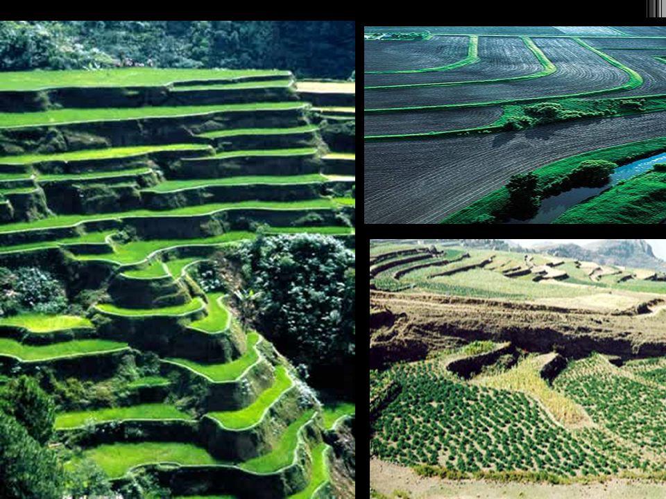 AGRICULTURA IRRIGADA OU AGRICULTURA DE JARDINAGEM Usada inicialmente pelos chineses, para cultivo de arroz; Diques são construídos e controlam e direcionam os volumes dágua; Não há máquinas substituindo o trabalho humano; Há uma enorme concentração de mão de obra por km 2 e pouca disponibilidade de terra; Tal sistema é de alta produtividade sem a necessidade de reposição de fertilizantes, e por esse motivo também é conhecido como AGRICULTURA INTENSIVA ; Acelera o crescimento do arroz; Garante 2 ou 3 colheitas por ano em um único terreno.
