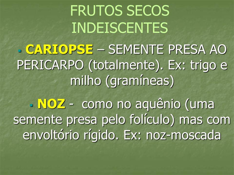 FRUTOS SECOS INDEISCENTES CARIOPSE – SEMENTE PRESA AO PERICARPO (totalmente). Ex: trigo e milho (gramíneas) CARIOPSE – SEMENTE PRESA AO PERICARPO (tot