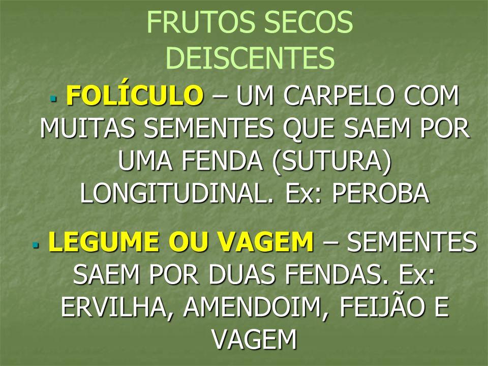 FRUTOS SECOS DEISCENTES FOLÍCULO – UM CARPELO COM MUITAS SEMENTES QUE SAEM POR UMA FENDA (SUTURA) LONGITUDINAL. Ex: PEROBA FOLÍCULO – UM CARPELO COM M