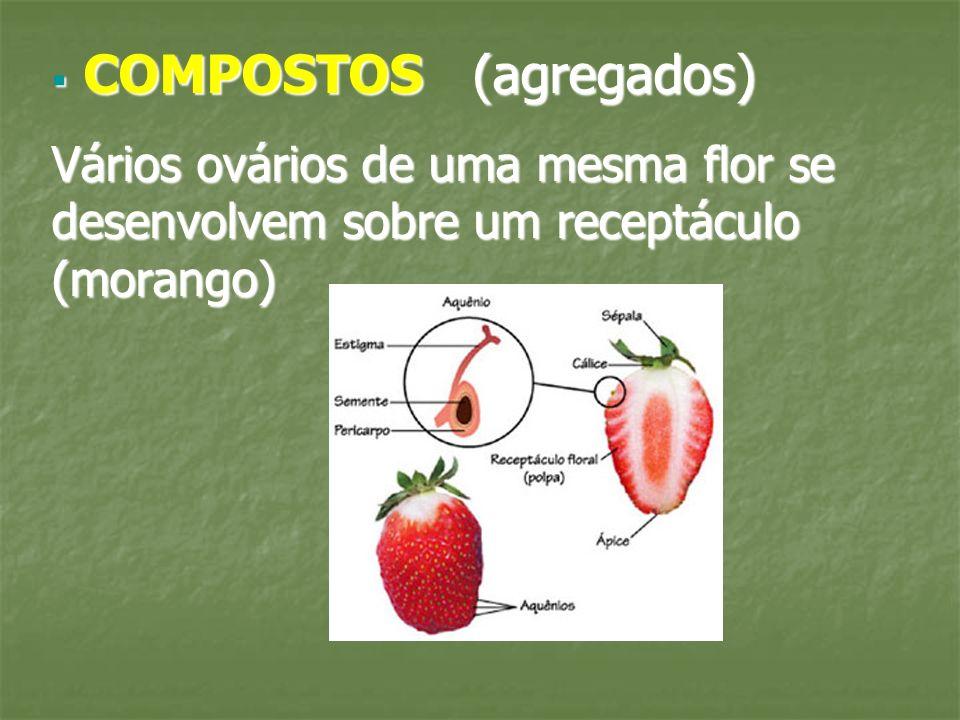 COMPOSTOS (agregados) COMPOSTOS (agregados) Vários ovários de uma mesma flor se desenvolvem sobre um receptáculo (morango)
