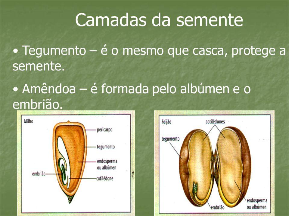 Os tipos de frutos Frutos simples Originam-se de um só ovário.