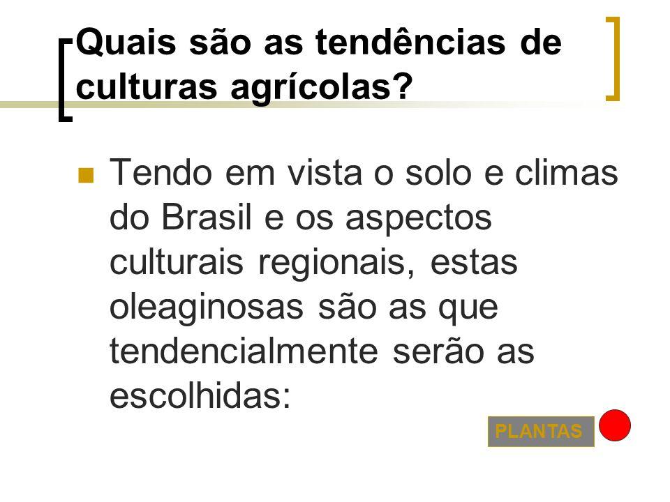 Quais são as tendências de culturas agrícolas? Tendo em vista o solo e climas do Brasil e os aspectos culturais regionais, estas oleaginosas são as qu